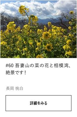 #60 吾妻山の菜の花と相模湾、絶景です!